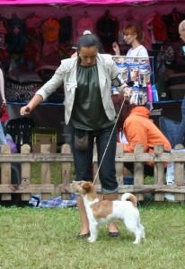 Dog Show košice